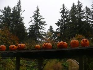 Fall Pumpkins 2013