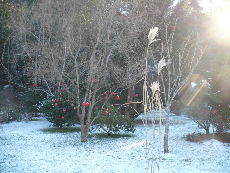 Christmas Yard on Protection Island