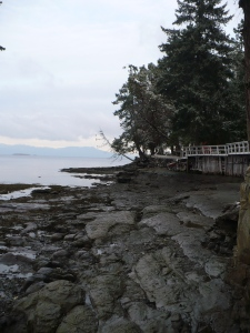 Photo of rocky beach with snowy trees on a point and ocean behind.