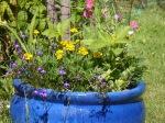 Ahoy Guesthouse planter