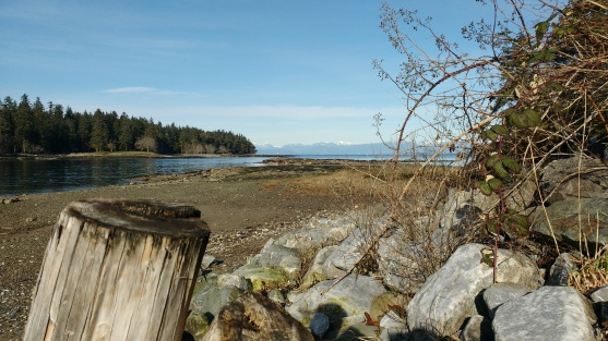 Clear winter day at the beach. Log, rocks, bushes in foreground, and Newcastle Island & ocean behind.