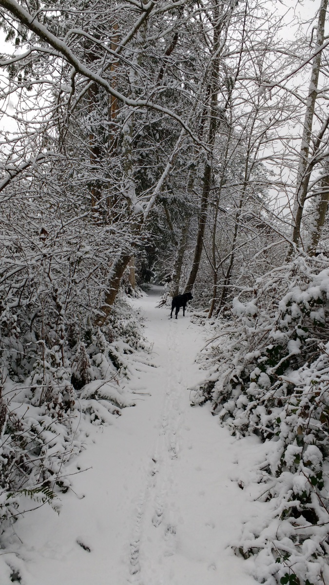 Libby dog on a snowy trail.